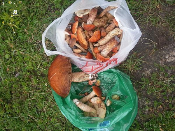 где в тюмени собирают грибы сейчас